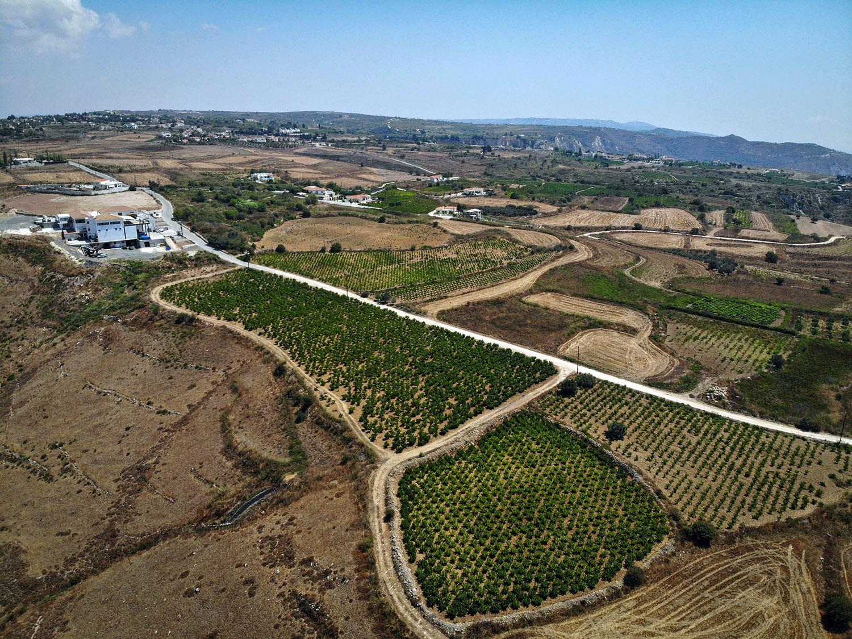 vasilikon winery kathikas